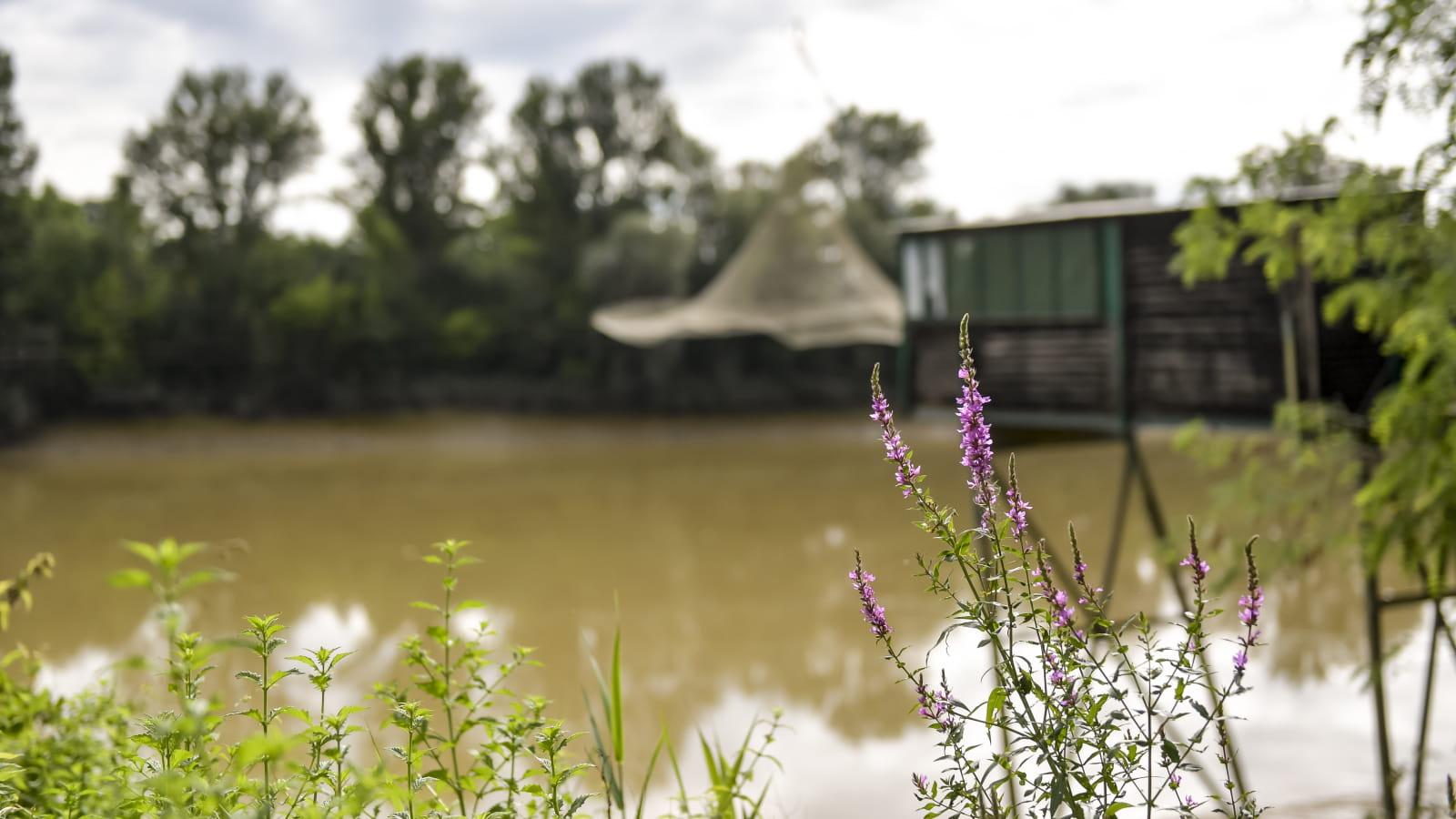 Carrelet de pêche en bord de Garonne